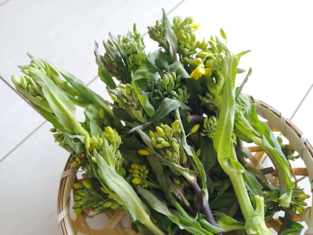 菜の花|ヴィーナース(venurseherbs)